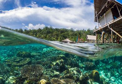 Дайвинг сафари в Индонезии