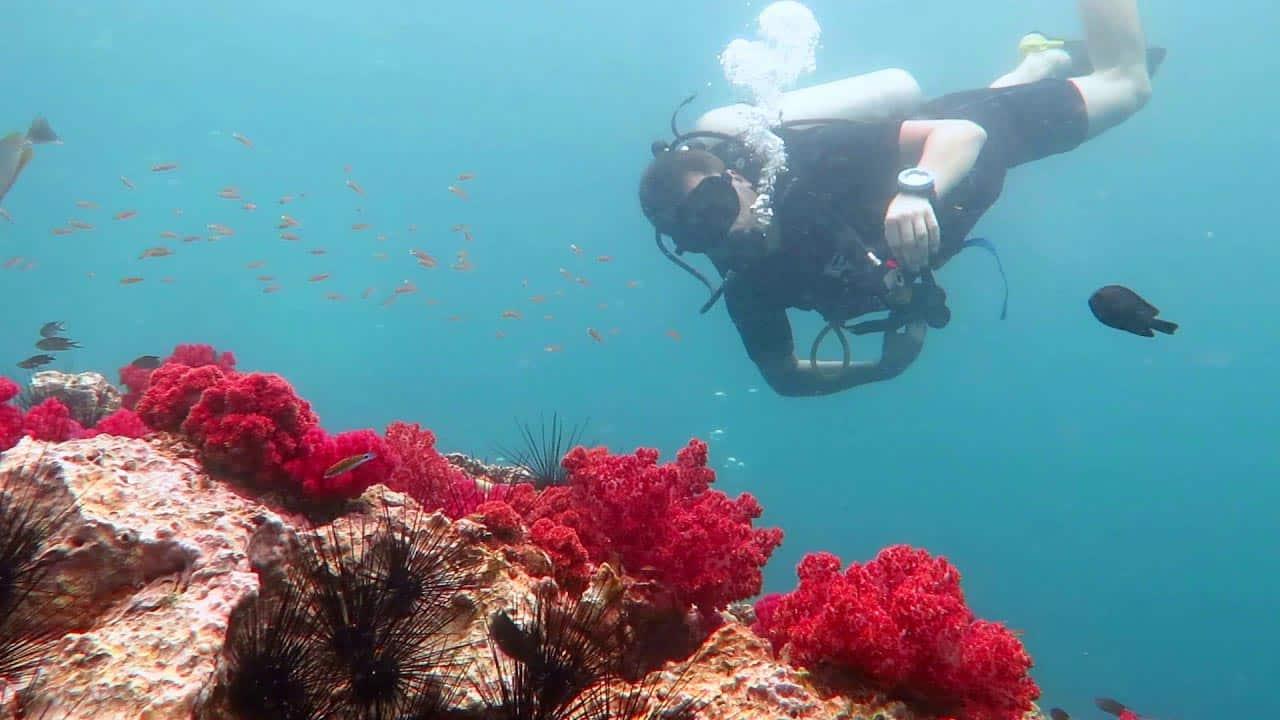 Дайвинг в Андаманском море на Пхукете в Таиланде.